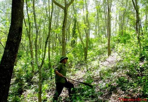 Chứng minh rằng bảo vệ rừng là bảo vệ cuộc sống của chúng ta