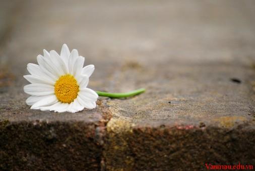 Nghị luận xã hội về lòng khiêm tốn