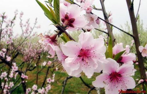 Chuyển nội dung bài thơ Mùa xuân nho nhỏ của Thanh Hải thành một bài văn