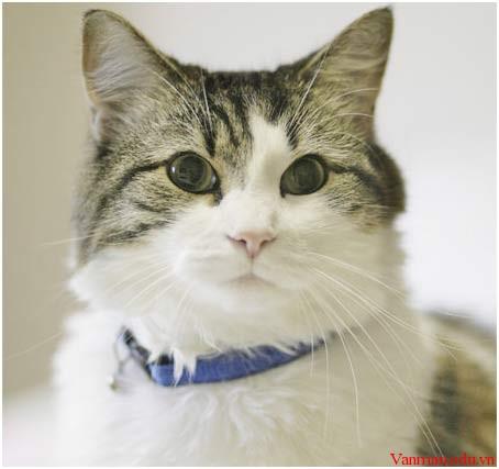 Oscar_cat1
