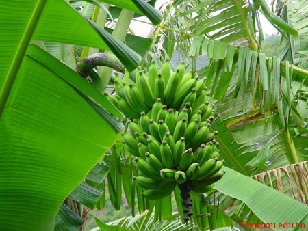 banan23a