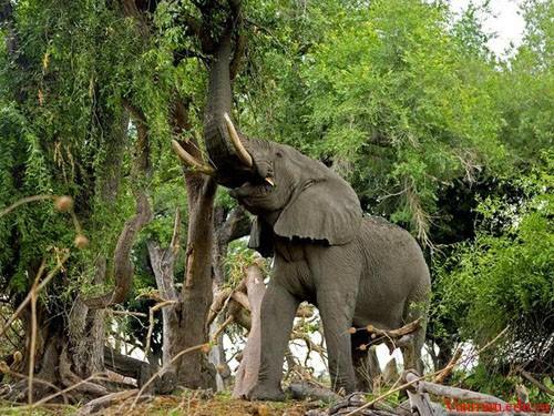 e56 - Tả con voi trong sở thú
