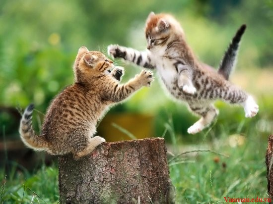 meod34 - Tả con mèo nhà em nuôi hoặc con mèo mà em thường thấy