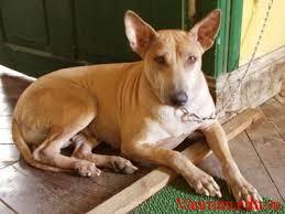 ied3s - Tả con chó nuôi trong nhà