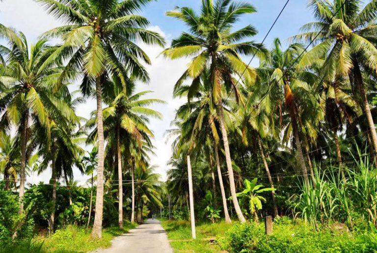 Nêu cảm nghĩ của em về cây dừa mà đã từng trông thấy