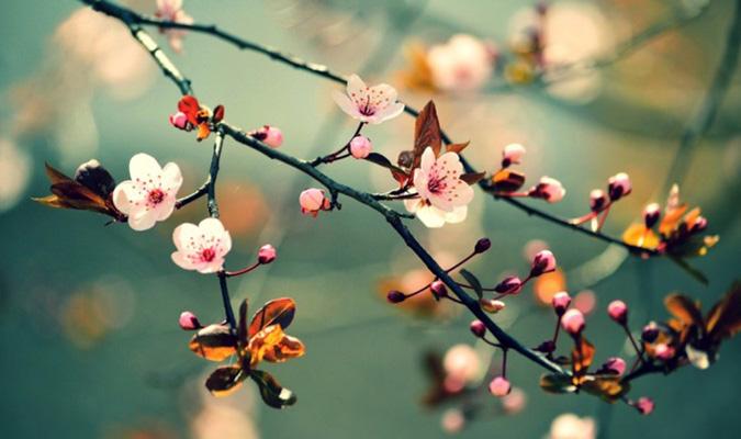 phat bieu cam nghi cua em ve mua xuan hay nhat - Phát biểu cảm nghĩ của em về mùa xuân hay nhất