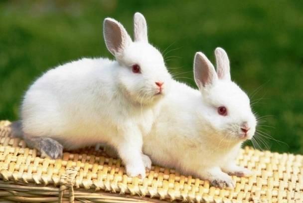 Em hãy miêu tả con thỏ mà em có dịp trông thấy hay nhất