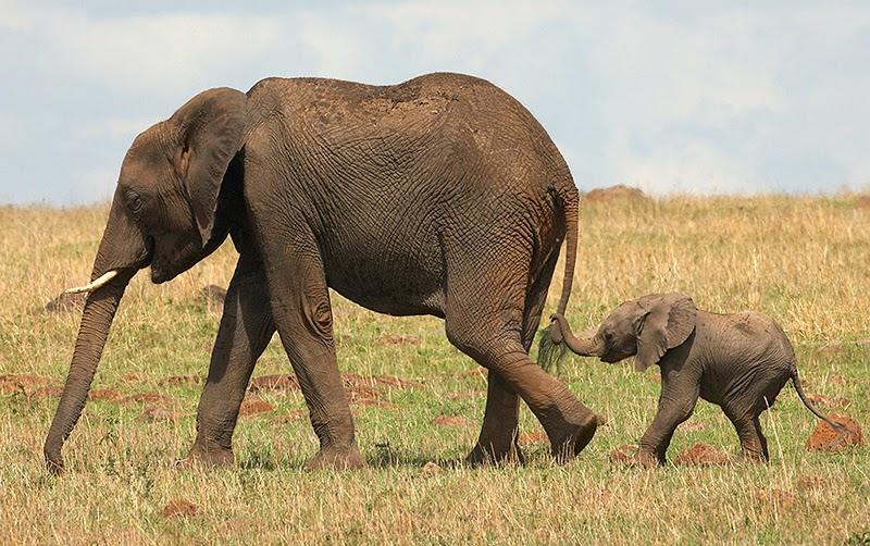 Em hãy miêu tả con voi mà em từng trông thấy