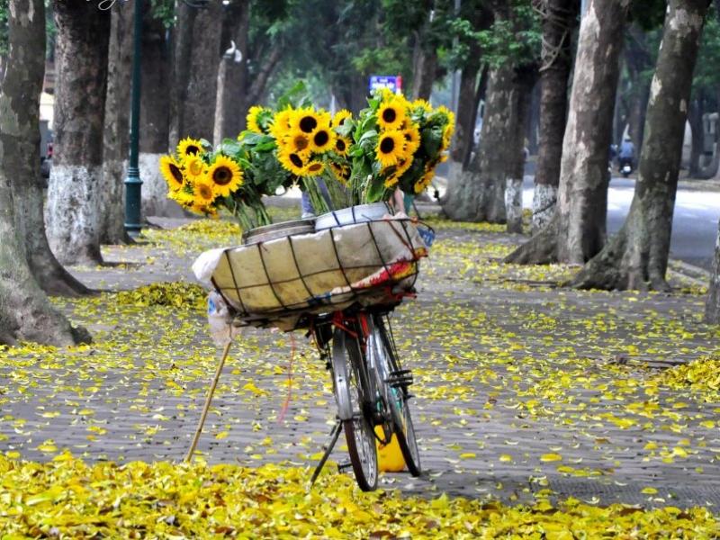 Em hãy miêu tả về mùa thu trên quê hương em