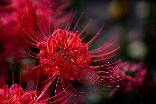 nhung bai tho ngan hay ve hoa dac sac nhat 1 - Những bài thơ ngắn hay về hoa đặc sắc nhất