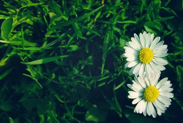 Những bài thơ ngắn hay về hoa đặc sắc nhất